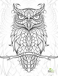 Owl Colouring Page трафареты Owl C