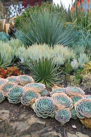 desert gardening. 30 Trendy And Beautiful Desert Garden Décor Ideas Gardening