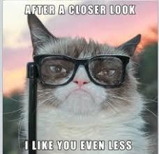 Grumpy Cat (clean)~ on Pinterest   Grumpy Cat, Grumpy Cat Quotes ... via Relatably.com