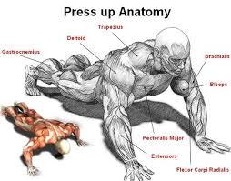 25 Unique Bodybuilding Exercises