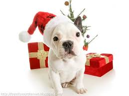 cute merry christmas wallpaper dogs. Interesting Dogs Christmas Dog For Cute Merry Wallpaper Dogs