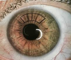 Health - What An Iris Analysis Can Reveal - True Better You
