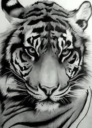 tiger drawing tattoo. Simple Tattoo My Tattoo  Sumatran Tiger By Artistelllie With Drawing Tattoo