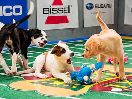 puppy bowl 2015 falcor. Contemporary Bowl 2015 Puppy Bowl Betting Guide In Falcor