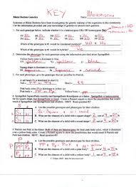 genetic crosses worksheet free worksheets library download and ...