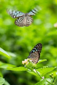 Colorful Butterfly HD Images Download ...