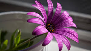 latest wallpapers of flowers. Delighful Wallpapers Beautifull Purple Flower Wallpaper Throughout Latest Wallpapers Of Flowers H