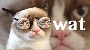 grumpy cat good smile.  Cat My Second Grumpy Cat Wallpaper And Grumpy Cat Good Smile N