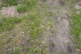 Ground Outdoors Grass and Dirt Seamless Texture with normalmap