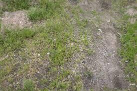 Dirt grass texture seamless Maps User Login Opengameart Ground Outdoors Grass And Dirt Seamless Texture With Normalmap