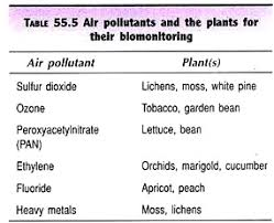 essay on air pollution sources types and effects air pollutants and the plants