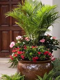 the best flowers for pots in full sun