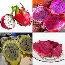 200 Seeds 4kinds Mix Pitaya Dragon Fruit Yellow ... - Amazon.com