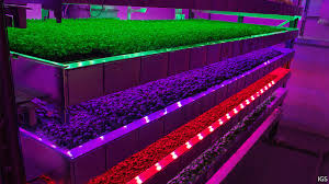 Growing Higher New Ways To Make Vertical Farming Stack Up