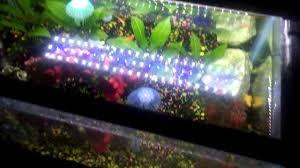 mingdak led aquarium light review
