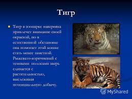 Презентация на тему Тема Приспособленности живых организмов к  6 Тигр