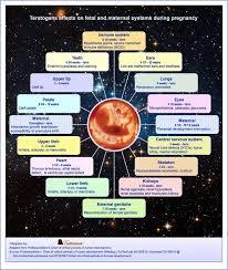 How Do Teratogens Influence In Prenatal Development Quora