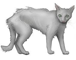 hyperthyroidism in cats cornell