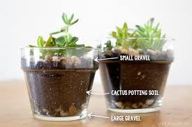 DIY Succulent Planters   Love in a Suitcase
