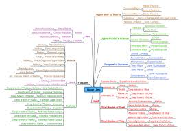 Muscle Action Chart List Of Skeletal Muscles Of The Human Body Wikipedia