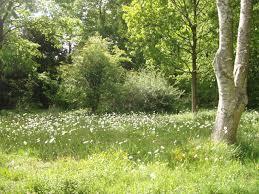 Small Picture Landscape Architects in Oxford Oxfordshire Branch Landscape