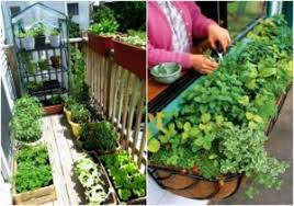Small Picture Small Balcony Garden Ideas India Amazing Small Balcony Garden