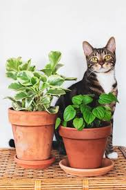you can still fill your home with plants even if you have a dog or cat
