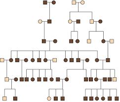 Hair Genetics Chart