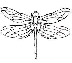 Small Picture dragonfly line drawings uk Google Search mosaic templates