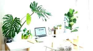 great office plants. Office Desk Plants Of A Best Great Cubicle  .