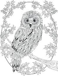 New Barn Owl Coloring Page And Free Printable Owl Coloring Sheets