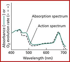 Action Spectrum 2