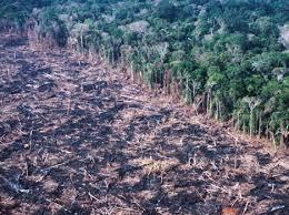 amazon rainforest deforestation. Unique Rainforest Amazon Deforestation Photo For Amazon Rainforest Deforestation Z