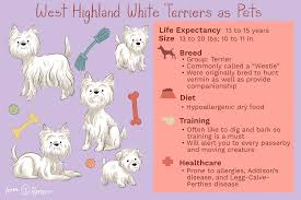 West Highland Terrier Growth Chart West Highland White Terrier Full Profile History And Care