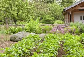Companion Planting Chart Uk Companion Planting With Potatoes What To Plant With