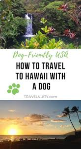 how to travel to hawaii with a dog and