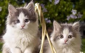 cute pets desktop wallpapers 402700451 cute pets pics