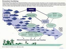 Marine Ecology Overfishing Lecture Ideas Ecology