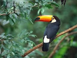 real jungle animals. Beautiful Jungle Animals Of The Jungle Throughout Real N