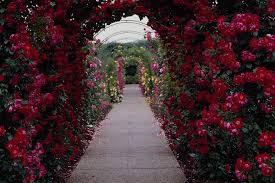 Roses Flowers Wallpapers Hoontoidly Rose Flower Garden Wallpaper Images