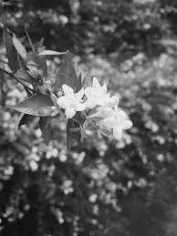 白黒に関する写真写真素材なら写真ac無料フリーダウンロードok