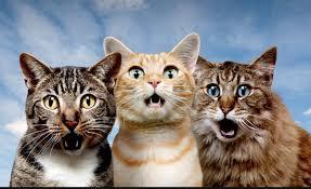 The Amazing Cat Show IV - ColumbusUnderground.com