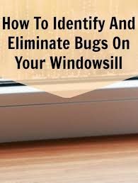 how to get rid of bugs on the windowsill this summer i have been noticing