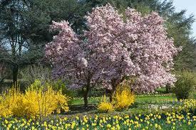 early spring blooming flowers