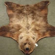 The Bear Skin Rug that got Away XRay Spectator