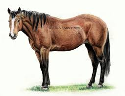 horse drawing in color. Perfect Drawing Horse Drawings  Drawing In Colored Pencil For In Color E