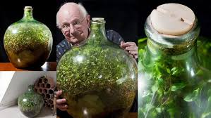 bell bottoms and terrariums gardener david latimer planted four seedlings in a 10 gallon carboy an enormous glass jug from the pre plastics