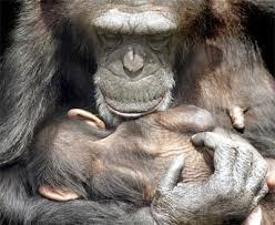 Resultado de imagen de amor madre