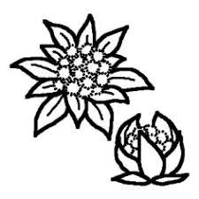 ふきのとう白黒春の味覚の無料イラストミニカットクリップアート素材