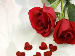 Beautiful Red Rose Quotes Best Of Red Roses Best Flowers Red Rose Rose The Beautiful Red Rose Rose